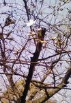 春たより  2